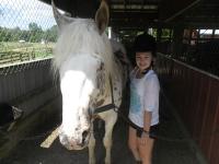 br-horse-grooming