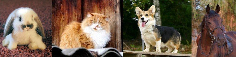 Meet Bonnie Illies, animal intuitive and pet healer