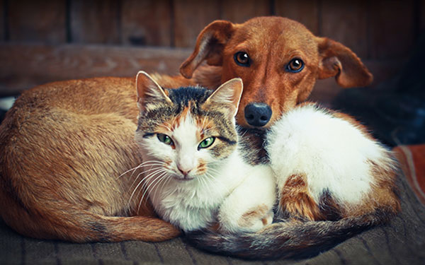 Dog and Cat Boarding