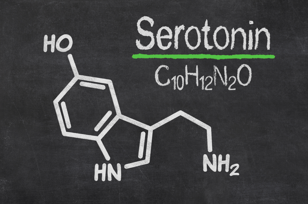 Everything You Need To Know About SEROTONIN