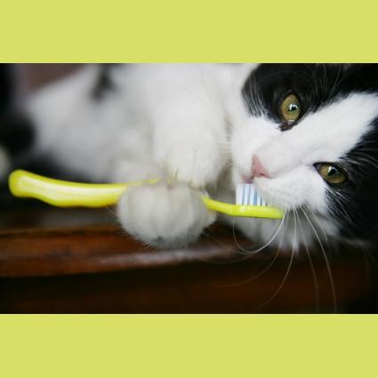 Cat_Dental_Health