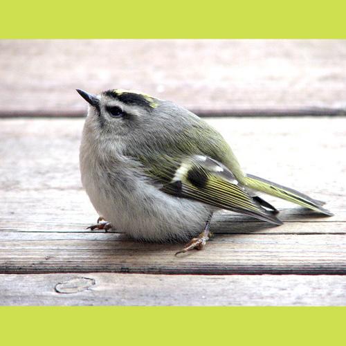 Gresham_Animal_Hospital_Feed_Your_Bird_Well