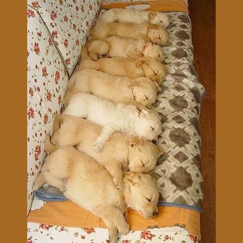 Gresham_Animal_Hospital_National_Puppy_Day