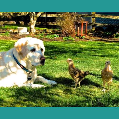 Gresham Animal Hospital Healthy Garden and Pet Food