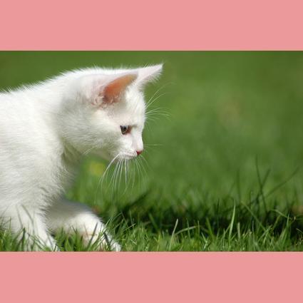 Gresham Animal Hospital_Safe Summer tip 2 for a happy cat
