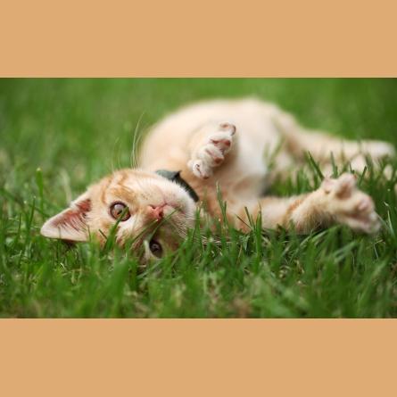 Gresham Animal Hospital_Safe Summer tip 3 for a happy cat