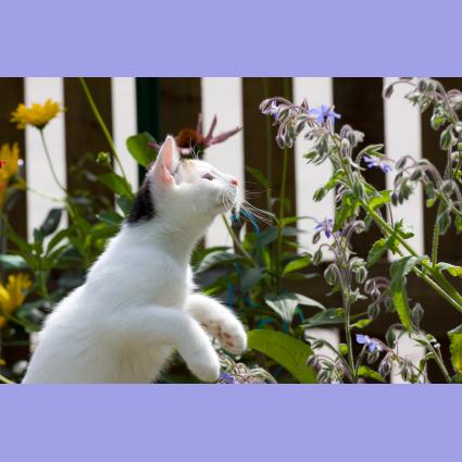 Gresham Animal Hospital_Safe Summer tip 4 for a happy cat