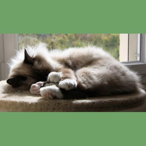 Gresham Animal Hospital_Safe Summer tip 5 for a happy cat