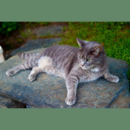 Gresham Animal Hospital_Safe Summer tip 6 for a happy cat