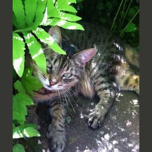 Gresham Animal Hospital_Safe Summer tip 7 for a happy cat