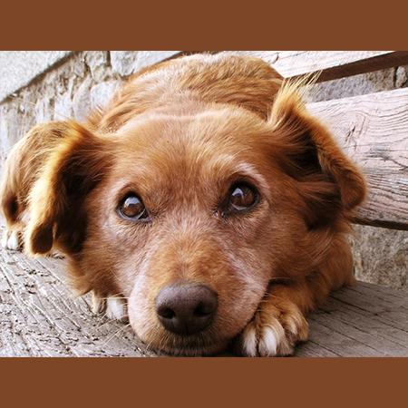Gresham Animal Hospital_Lost_dog