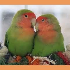 Gresham_Animal_Hospital_bird_vet