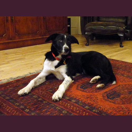 Gresham Animal Hospital_Dogs_Indoors_Tip1