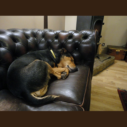 Gresham Animal Hospital_Dogs_Indoors_Tip3