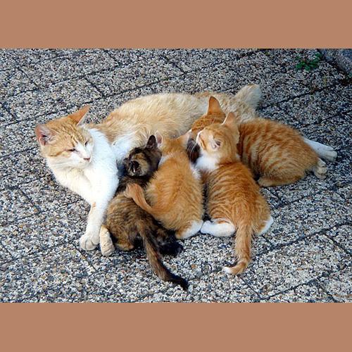 Gresham Animal Hospital_Kittens