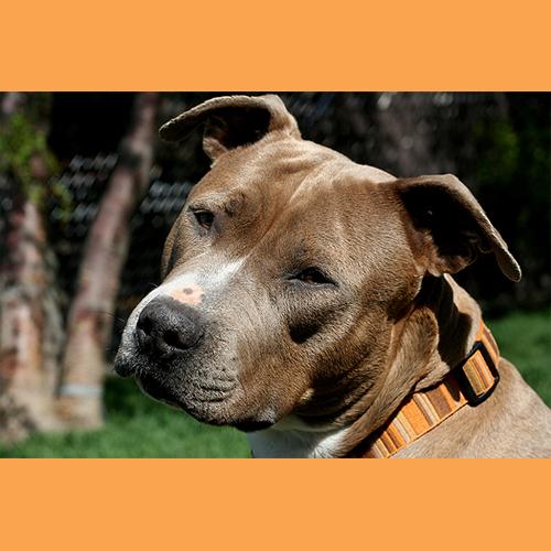 senior dog 6 (1)