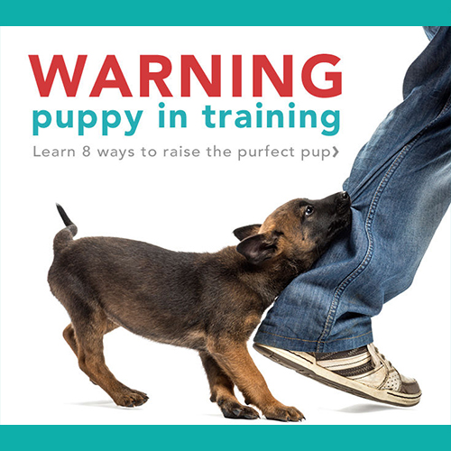 Gresham Animal Hospital_8_Puppy_tips