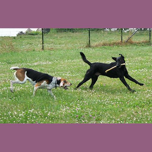 Gresham Animal Hospital_Dogs_Outside_Ticks