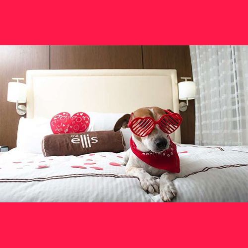 Gresham Animal Hospital_Pet_hotels