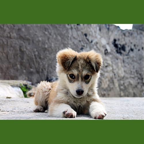 Gresham Animal Hospital_Puppy_Spay_Neuter