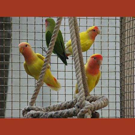 Gresham Animal Hospital_bird_health