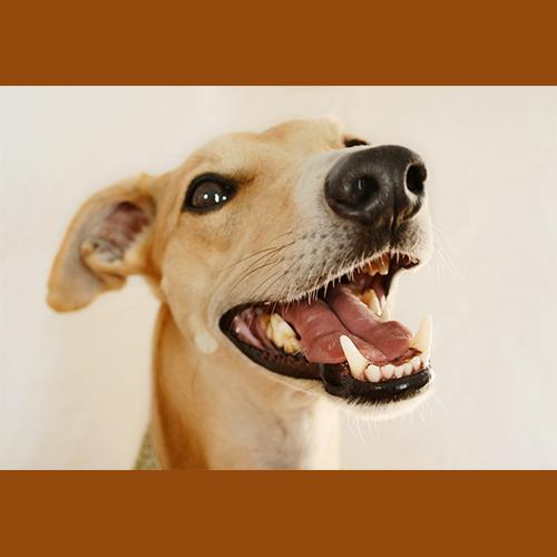 Gresham Animal Hospital_teeth_xrays