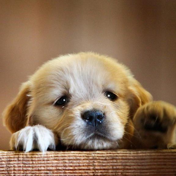 Gresham Animal Hospital_Puppy