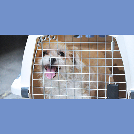 Gresham Animal Hospital_travelling_with_pets