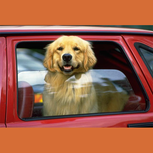 5_Tips_For_Keeping_Your_Dof_Cool_This_Summer_Never_Leave_Your_Dog_In_A_Car