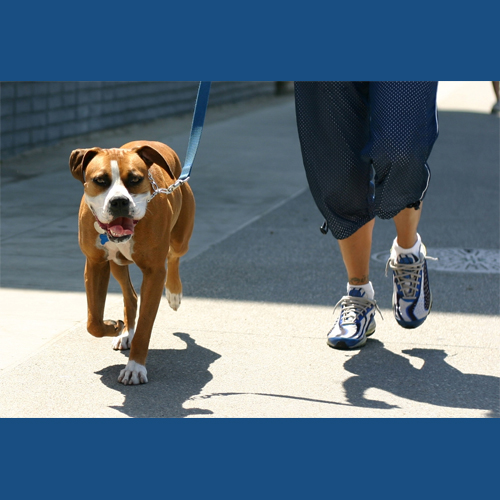 5_Tips_For_Keeping_Your_Dog_Cool_This_Summer_Avoid_Certain_Surfaces