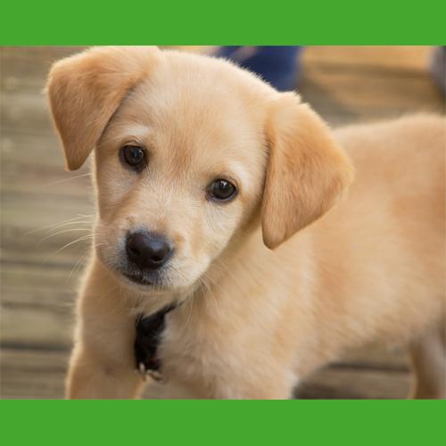 Puppy_Training_Tip_3
