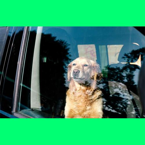 Gresham Animal Hospital_Keeping_Your_Dog_Safe_In_The_Car