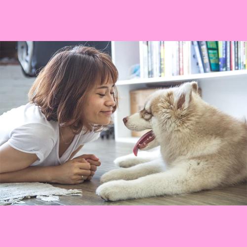Gresham Animal Hospital_Things_To_Consider_Before_Adopting_1