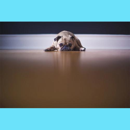 Gresham Animal Hospital_Things_To_Consider_Before_Adopting_2
