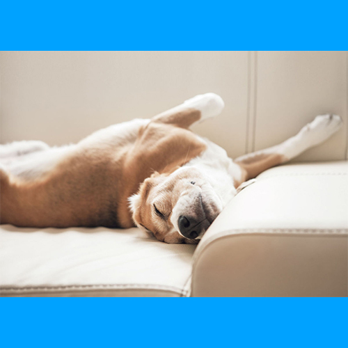 gresham-animal-hospital_tips_for_keeping_your_home_clean_with_pets