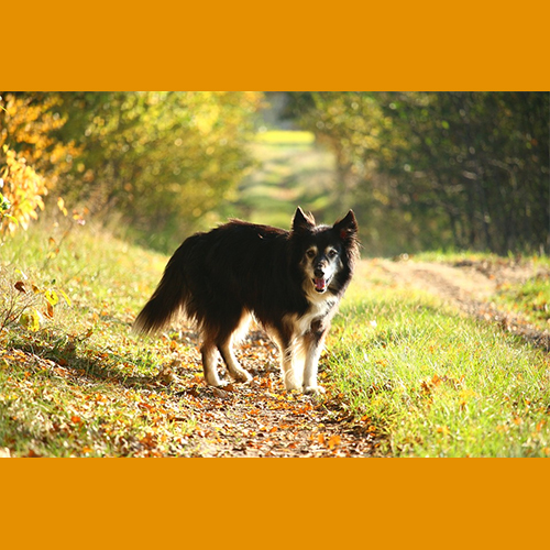 gresham-animal-hospital_autumn_safety_tip_4