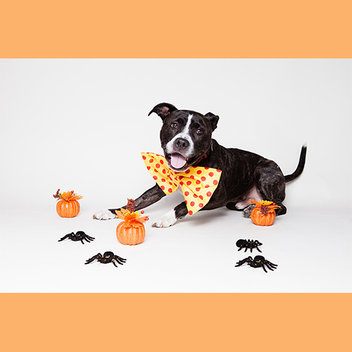 gresham-animal-hospital_tips_for_keeping_your_pet_safe_this_halloween_2