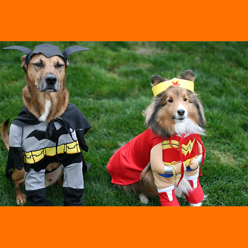 gresham-animal-hospital_tips_for_keeping_your_pet_safe_this_halloween_4