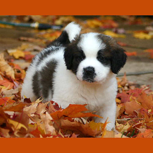 gresham-animal-hospital_puppy_training_tips_1