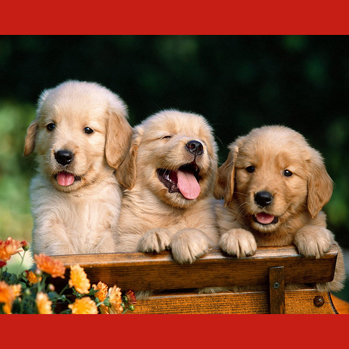 gresham-animal-hospital_puppy_training_tips_4
