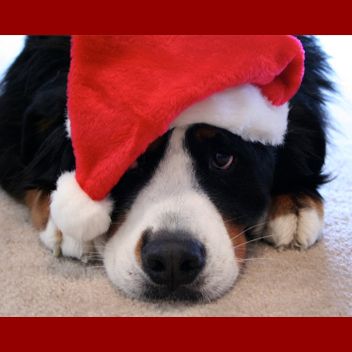 gresham-animal-hospital_holiday_pet_tips_4