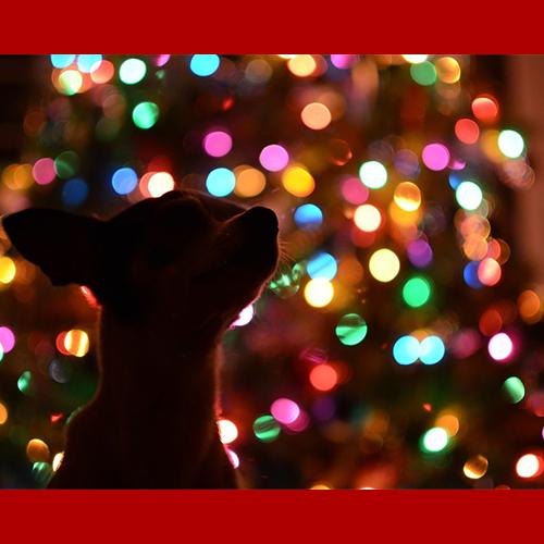 gresham-animal-hospital_tips_for_keeping_your_pet_safe_during_christmas