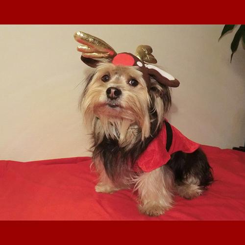 gresham-animal-hospital_tips_for_keeping_your_pet_safe_during_christmas_2