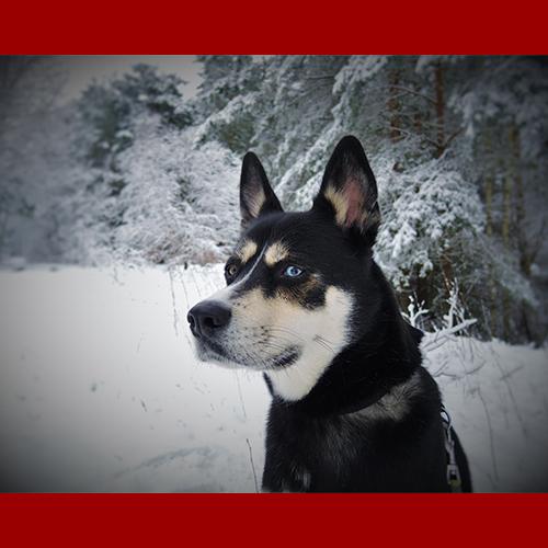 gresham-animal-hospital_tips_for_keeping_your_pet_safe_during_christmas_3