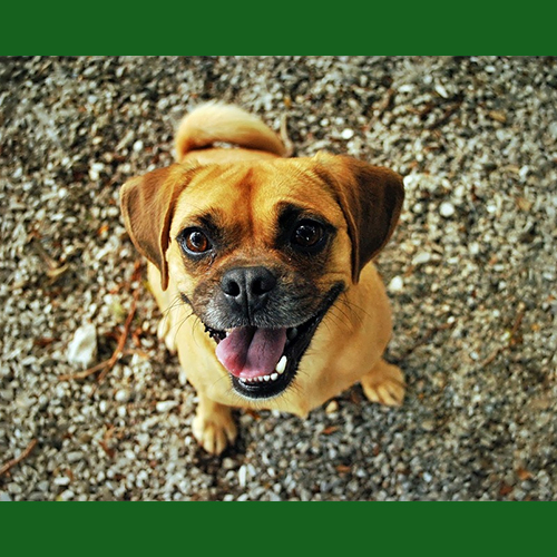 gresham-animal-hospital_keep_your_pet_happy_and_healthy_this_new_year