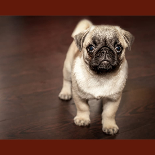 Gresham Animal Hospital_Tips_For_Caring_For_Your_Pet_1