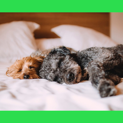 Gresham Animal Hospital_Tips_For_Caring_For_Your_Pet_2