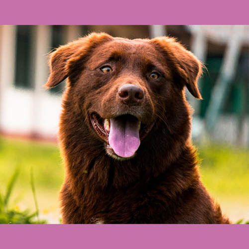 Gresham Animal Hospital_Tips_For_Caring_For_Your_Pet_9