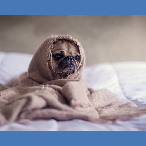 Gresham Animal Hospital_Winter_Weather_Safety_Tips_3