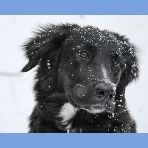 Gresham Animal Hospital_Winter_Weather_Safety_Tips_5